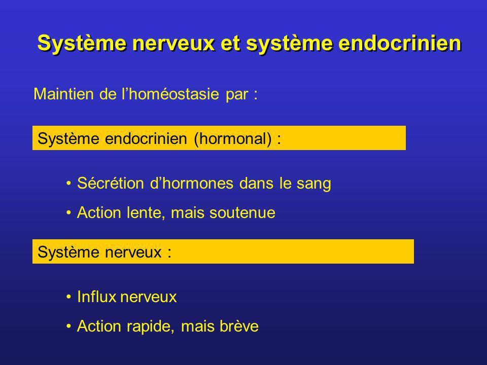 Système nerveux et système endocrinien Système endocrinien (hormonal) : Système nerveux : Maintien de lhoméostasie par : Sécrétion dhormones dans le s