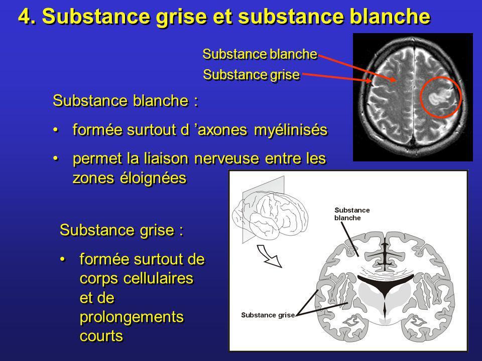 Substance blanche : formée surtout d axones myélinisés permet la liaison nerveuse entre les zones éloignées Substance blanche : formée surtout d axone