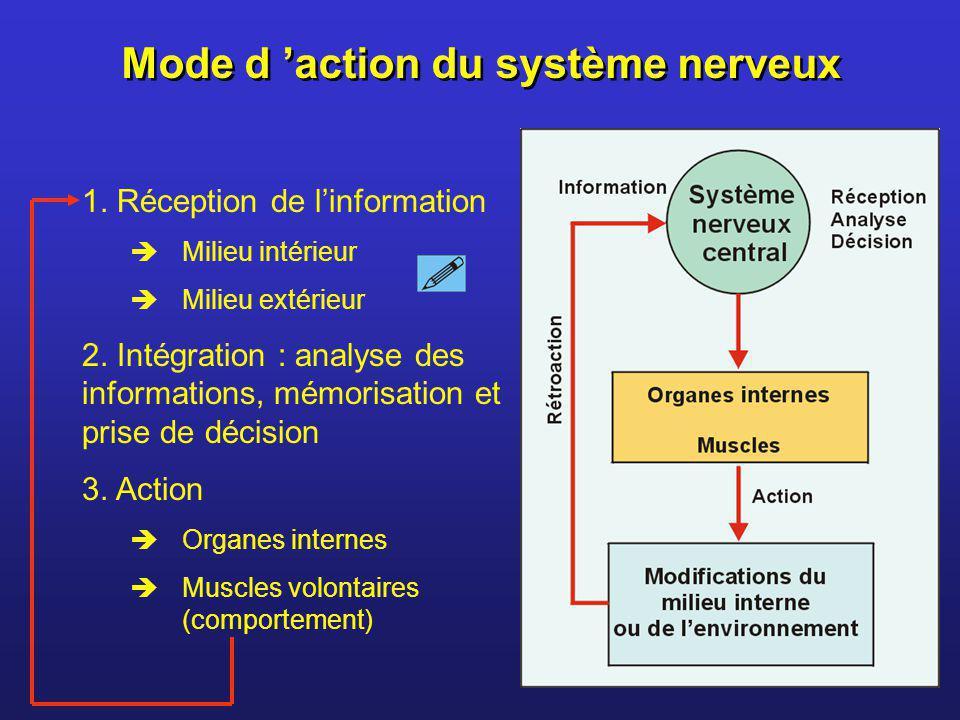 Mode d action du système nerveux 1. Réception de linformation Milieu intérieur Milieu extérieur 2. Intégration : analyse des informations, mémorisatio