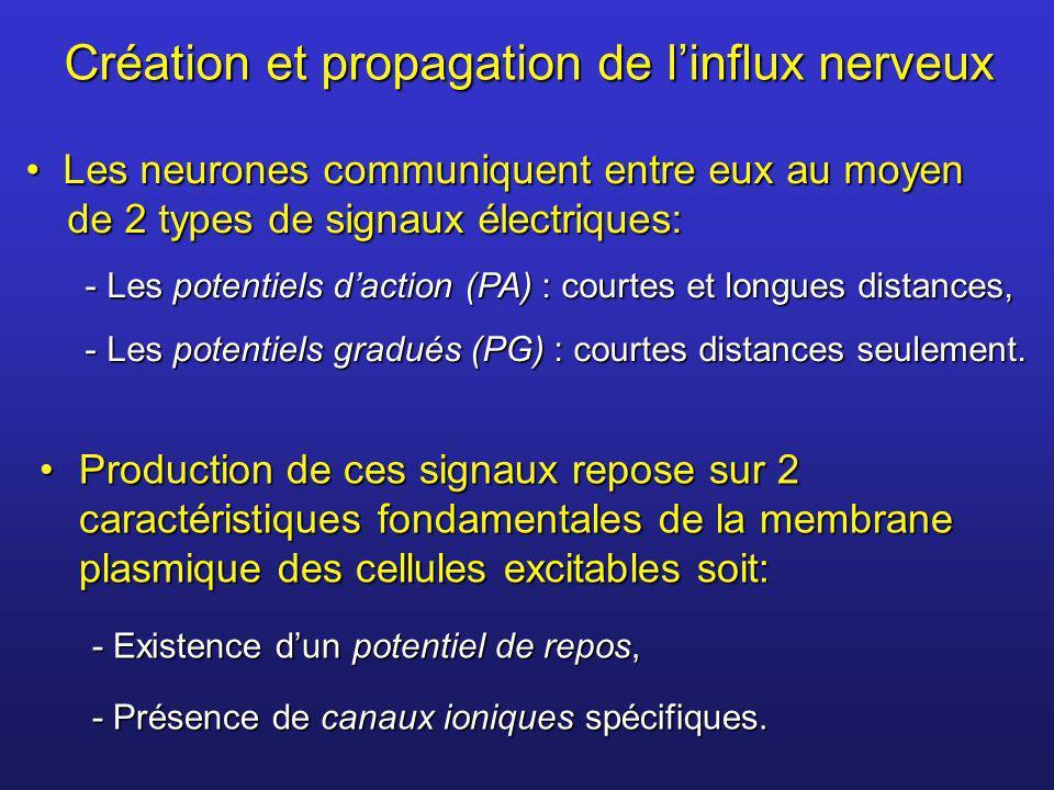Création et propagation de linflux nerveux Production de ces signaux repose sur 2 caractéristiques fondamentales de la membrane plasmique des cellules