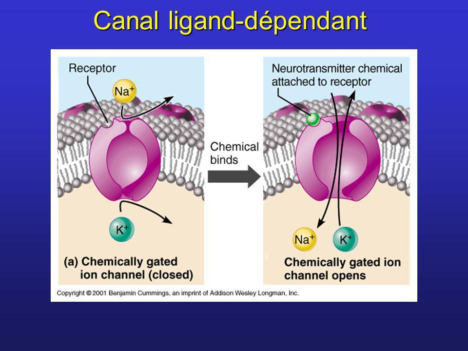 Canal ligand-dépendant