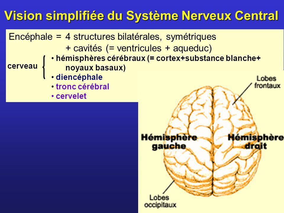 Vision simplifiée du Système Nerveux Central Encéphale = 4 structures bilatérales, symétriques + cavités (= ventricules + aqueduc) hémisphères cérébra