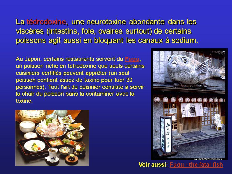 La tédrodoxine, une neurotoxine abondante dans les viscères (intestins, foie, ovaires surtout) de certains poissons agit aussi en bloquant les canaux