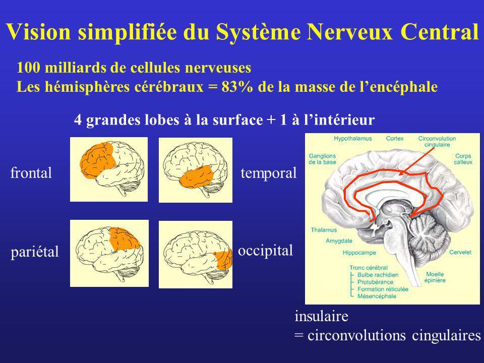 Vision simplifiée du Système Nerveux Central 100 milliards de cellules nerveuses Les hémisphères cérébraux = 83% de la masse de lencéphale frontaltemp