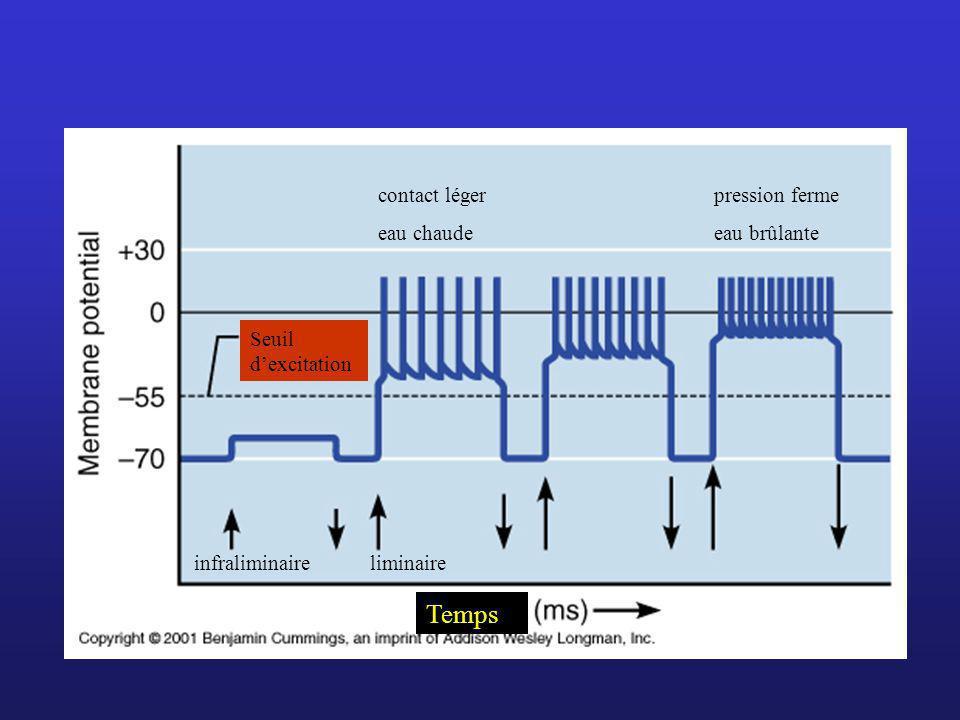 Seuil dexcitation Temps infraliminaireliminaire contact léger eau chaude pression ferme eau brûlante