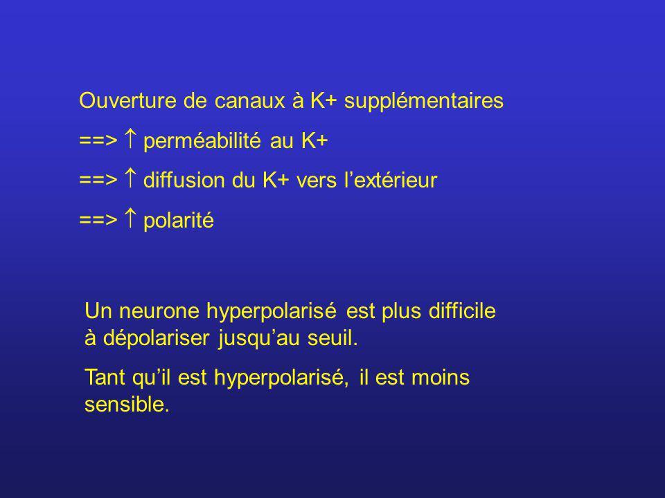 Ouverture de canaux à K+ supplémentaires ==> perméabilité au K+ ==> diffusion du K+ vers lextérieur ==> polarité Un neurone hyperpolarisé est plus dif