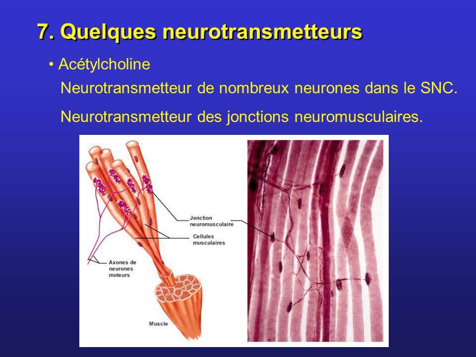 7. Quelques neurotransmetteurs Acétylcholine Neurotransmetteur de nombreux neurones dans le SNC. Neurotransmetteur des jonctions neuromusculaires.