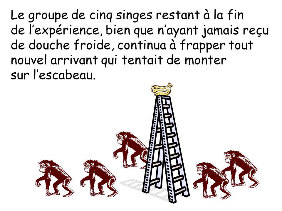 Le groupe de cinq singes restant à la fin de lexpérience, bien que nayant jamais reçu de douche froide, continua à frapper tout nouvel arrivant qui tentait de monter sur lescabeau.