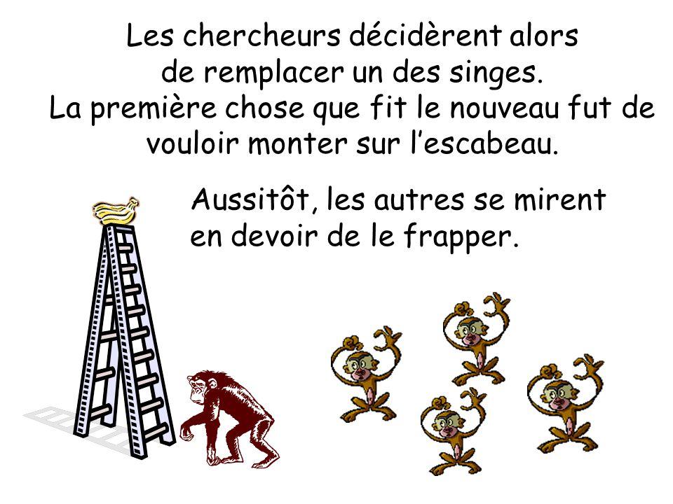Les chercheurs décidèrent alors de remplacer un des singes. La première chose que fit le nouveau fut de vouloir monter sur lescabeau. Aussitôt, les au
