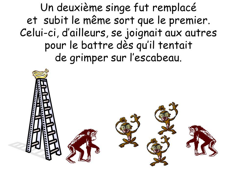 Un deuxième singe fut remplacé et subit le même sort que le premier. Celui-ci, dailleurs, se joignait aux autres pour le battre dès quil tentait de gr