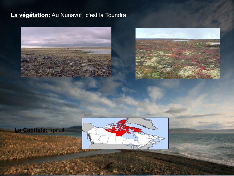La végétation: Au Nunavut, cest la Toundra La Capitale: Iqaluit