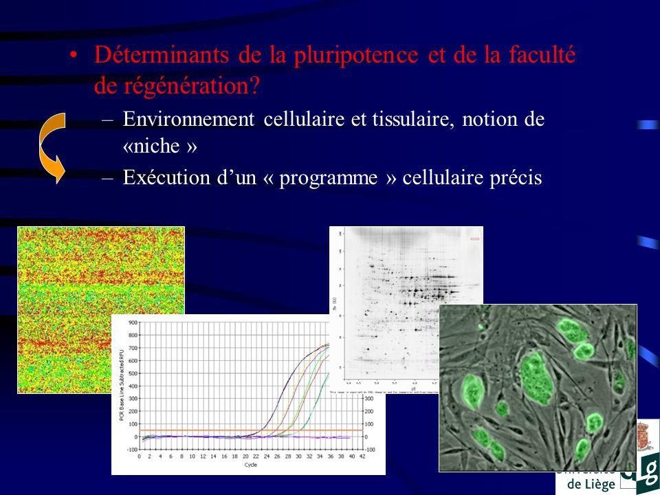 Déterminants de la pluripotence et de la faculté de régénération.