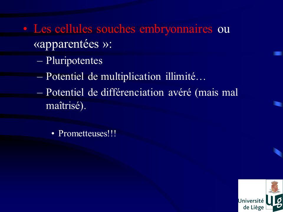 Les cellules souches embryonnaires ou «apparentées »: –Pluripotentes –Potentiel de multiplication illimité… –Potentiel de différenciation avéré (mais