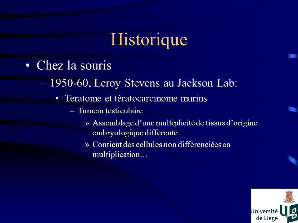 Chez la souris –1950-60, Leroy Stevens au Jackson Lab: Teratome et tératocarcinome murins –Tumeur testiculaire »Assemblage dune multiplicité de tissus dorigine embryologique différente »Contient des cellules non différenciées en multiplication… Historique