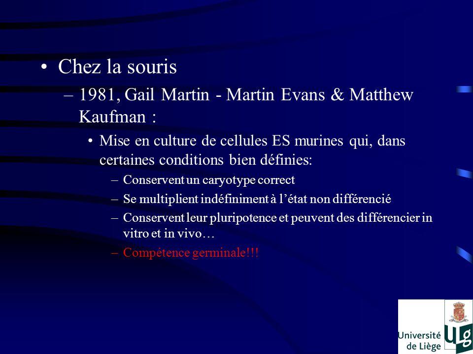 Chez la souris –1981, Gail Martin - Martin Evans & Matthew Kaufman : Mise en culture de cellules ES murines qui, dans certaines conditions bien définies: –Conservent un caryotype correct –Se multiplient indéfiniment à létat non différencié –Conservent leur pluripotence et peuvent des différencier in vitro et in vivo… –Compétence germinale!!!