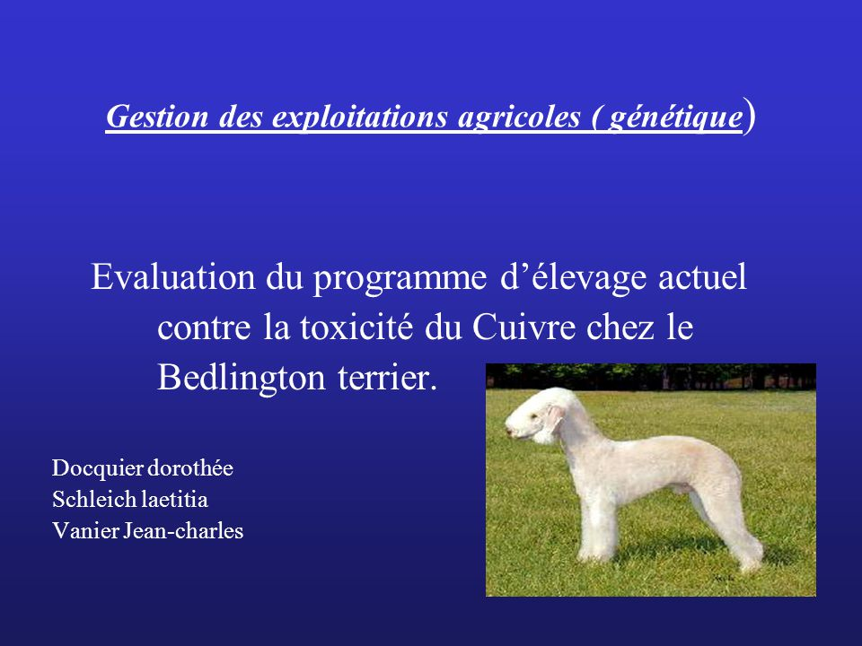 Gestion des exploitations agricoles ( génétique ) Evaluation du programme délevage actuel contre la toxicité du Cuivre chez le Bedlington terrier.