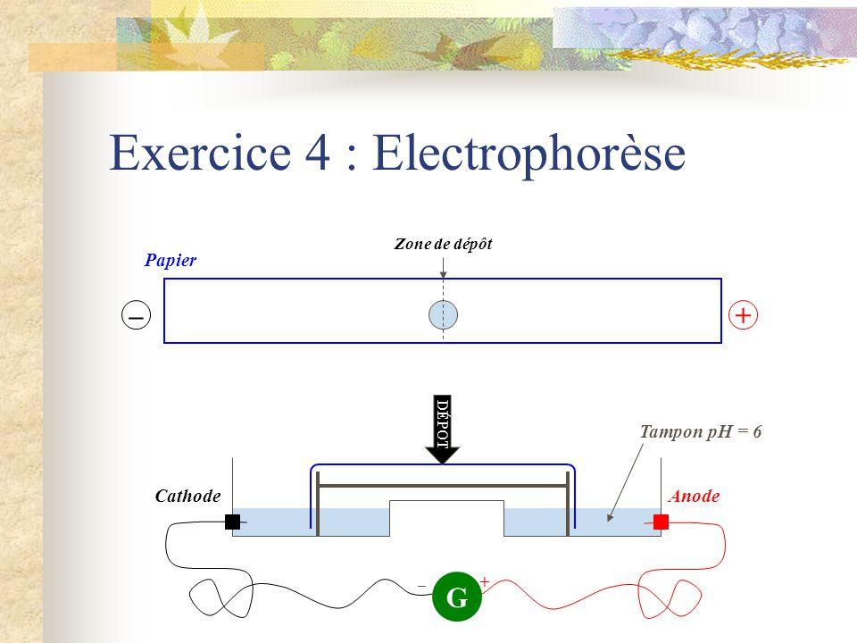 Tampon pH = 6 Exercice 4 : Electrophorèse AnodeCathode G + –+ Papier Zone de dépôt DÉPOT