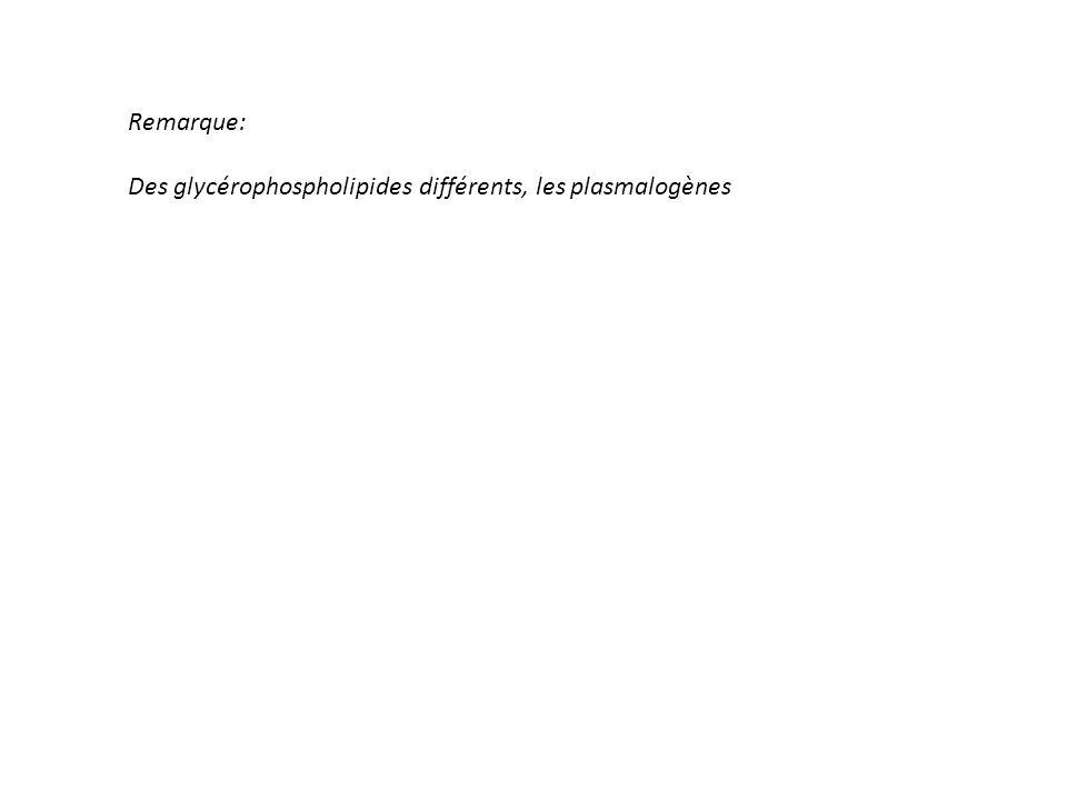 Remarque: Des glycérophospholipides différents, les plasmalogènes