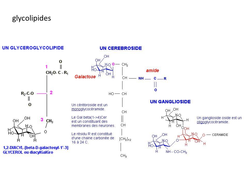 glycolipides