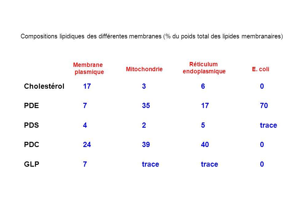 Compositions lipidiques des différentes membranes (% du poids total des lipides membranaires) Cholestérol17360 PDE7351770 PDS425trace PDC2439400 GLP7tracetrace0 Membrane plasmique Mitochondrie Réticulum endoplasmique E.