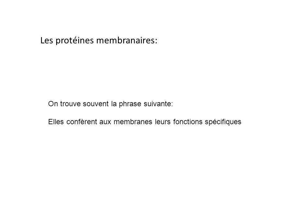 Les protéines membranaires: On trouve souvent la phrase suivante: Elles confèrent aux membranes leurs fonctions spécifiques
