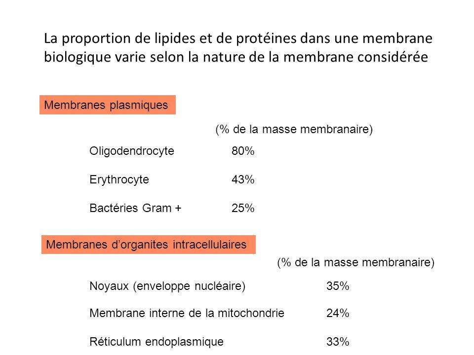 La proportion de lipides et de protéines dans une membrane biologique varie selon la nature de la membrane considérée (% de la masse membranaire) Membranes plasmiques Oligodendrocyte80% Erythrocyte43% Bactéries Gram +25% Membranes dorganites intracellulaires Noyaux (enveloppe nucléaire)35% Membrane interne de la mitochondrie24% Réticulum endoplasmique33% (% de la masse membranaire)