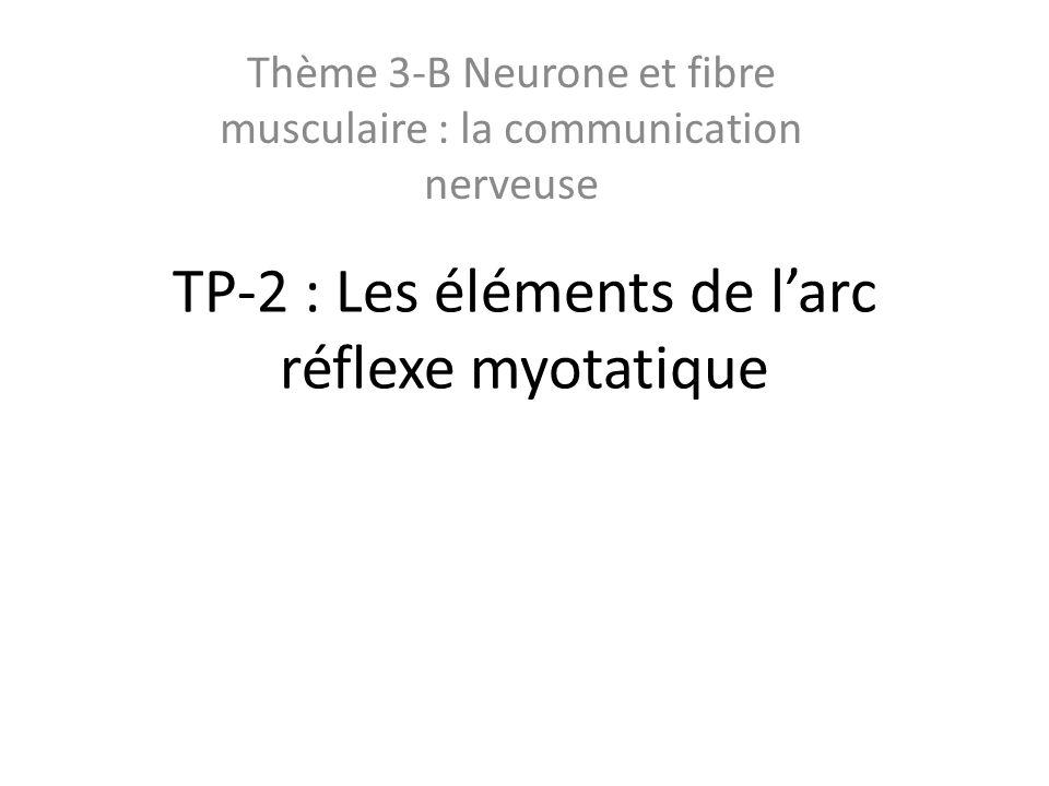 TP-2 : Les éléments de larc réflexe myotatique Thème 3-B Neurone et fibre musculaire : la communication nerveuse