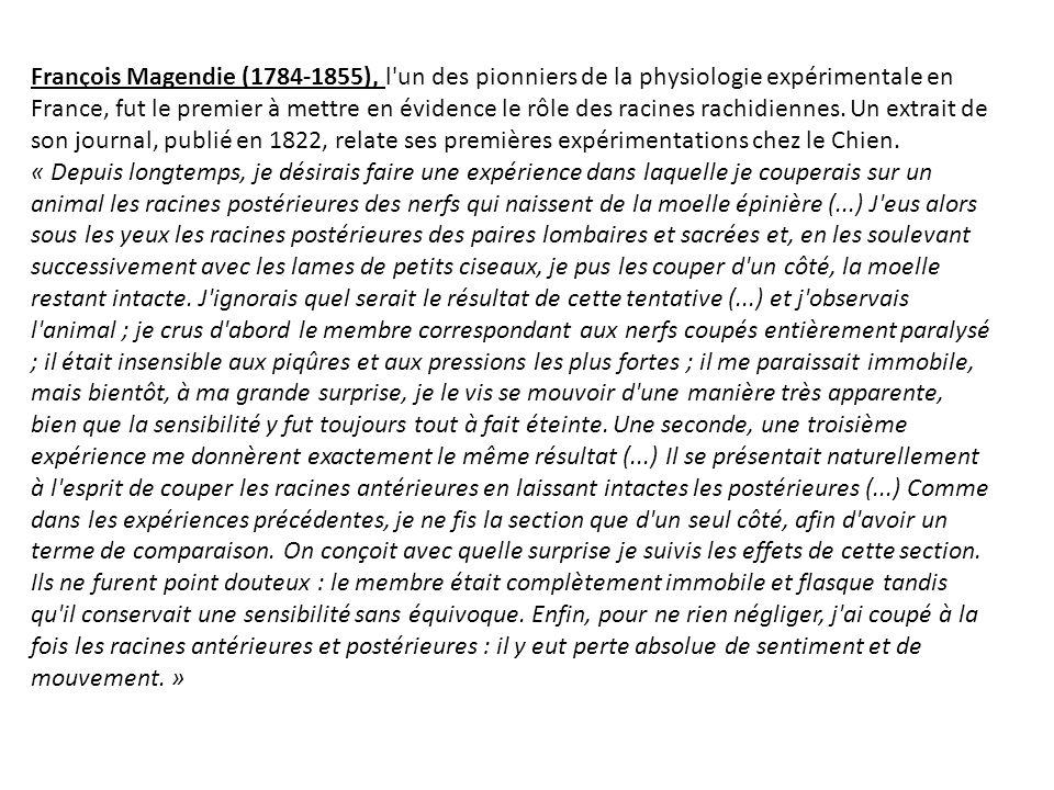 François Magendie (1784-1855), l'un des pionniers de la physiologie expérimentale en France, fut le premier à mettre en évidence le rôle des racines r