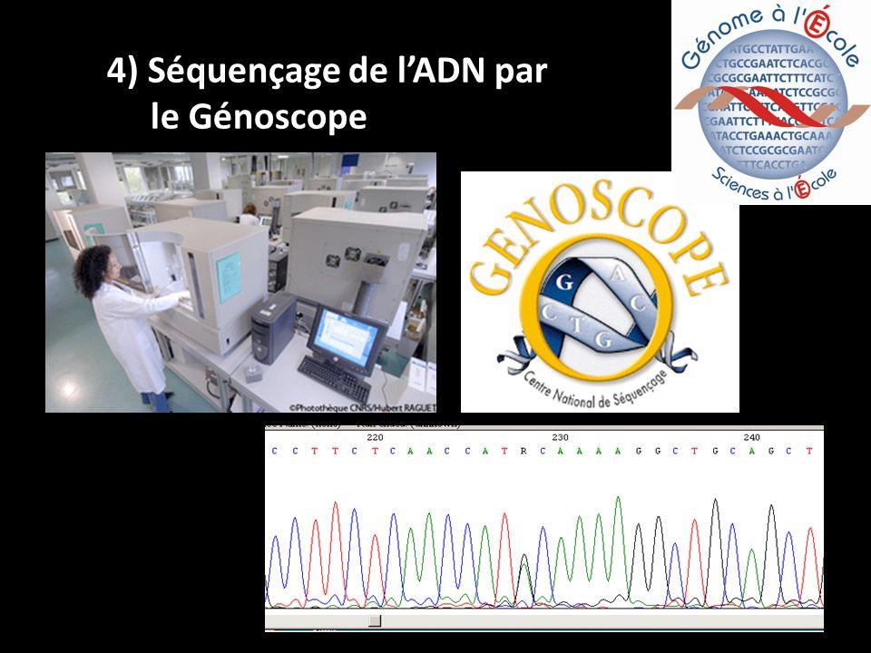 4) Séquençage de lADN par le Génoscope