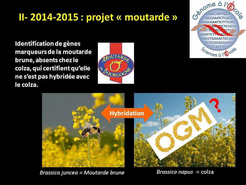 Brassica juncea = Moutarde brune Brassica napus = colza Hybridation .