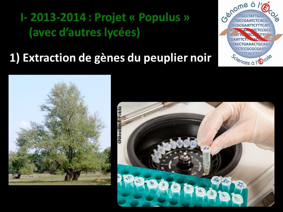1) Extraction de gènes du peuplier noir I- 2013-2014 : Projet « Populus » (avec dautres lycées)