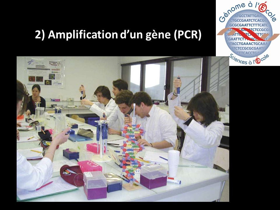2) Amplification dun gène (PCR)