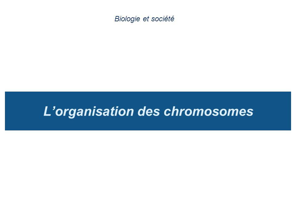 Lorganisation des chromosomes Biologie et société