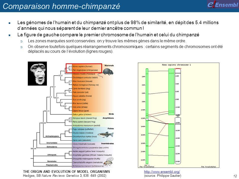 Comparaison homme-chimpanzé Les génomes de lhumain et du chimpanzé ont plus de 98% de similarité, en dépit des 5.4 millions dannées qui nous séparent