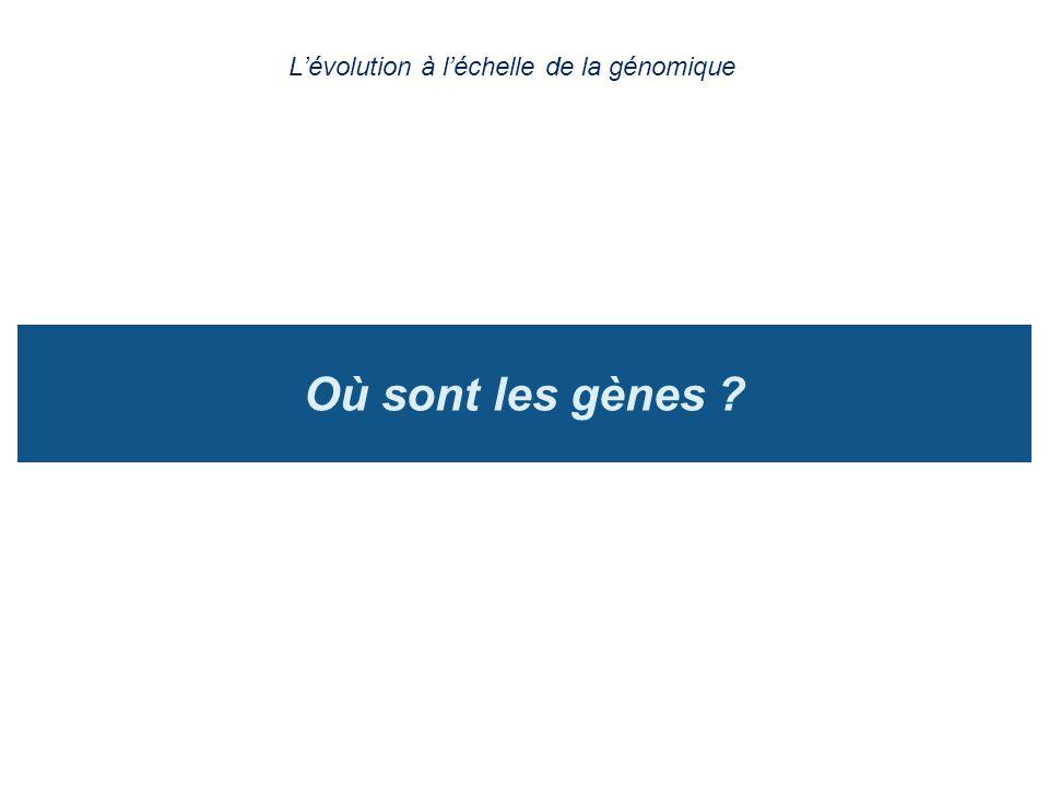 Où sont les gènes ? Lévolution à léchelle de la génomique