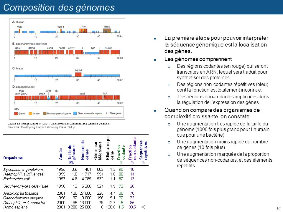 Composition des génomes La première étape pour pouvoir interpréter la séquence génomique est la localisation des gènes. Les génomes comprennent Des ré