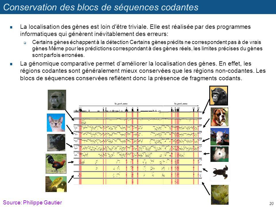 Conservation des blocs de séquences codantes La localisation des gènes est loin d'être triviale. Elle est réalisée par des programmes informatiques qu