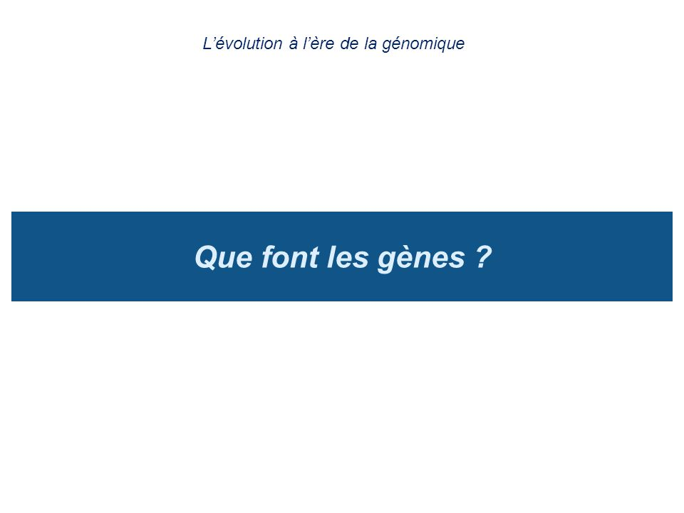Que font les gènes ? Lévolution à lère de la génomique