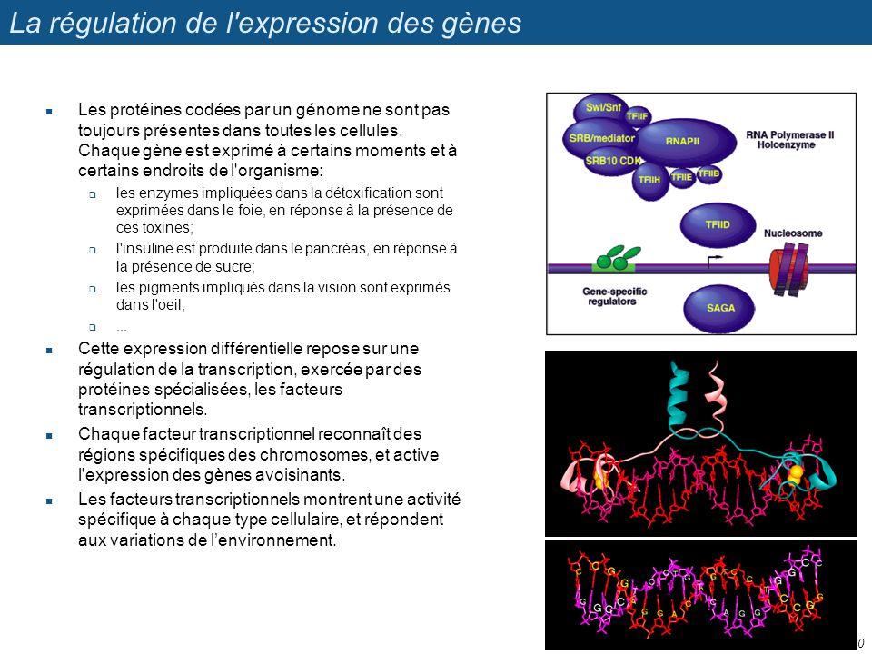 La régulation de l'expression des gènes Les protéines codées par un génome ne sont pas toujours présentes dans toutes les cellules. Chaque gène est ex