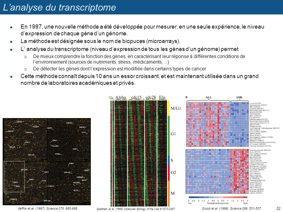 Lanalyse du transcriptome En 1997, une nouvelle méthode a été développée pour mesurer, en une seule expérience, le niveau dexpression de chaque gène d
