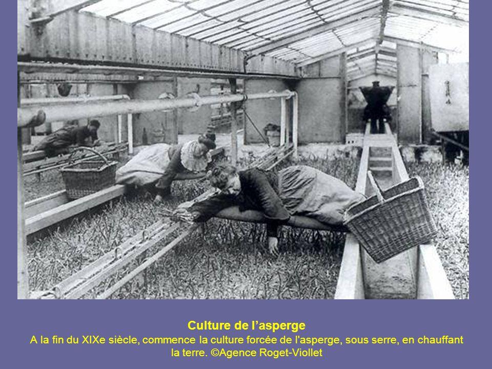 Confiseurs à Apt Un chaudron de confiture , c est ainsi que Mme de Sévigné nommait la ville d Apt (Vaucluse), capitale du fruit confit.