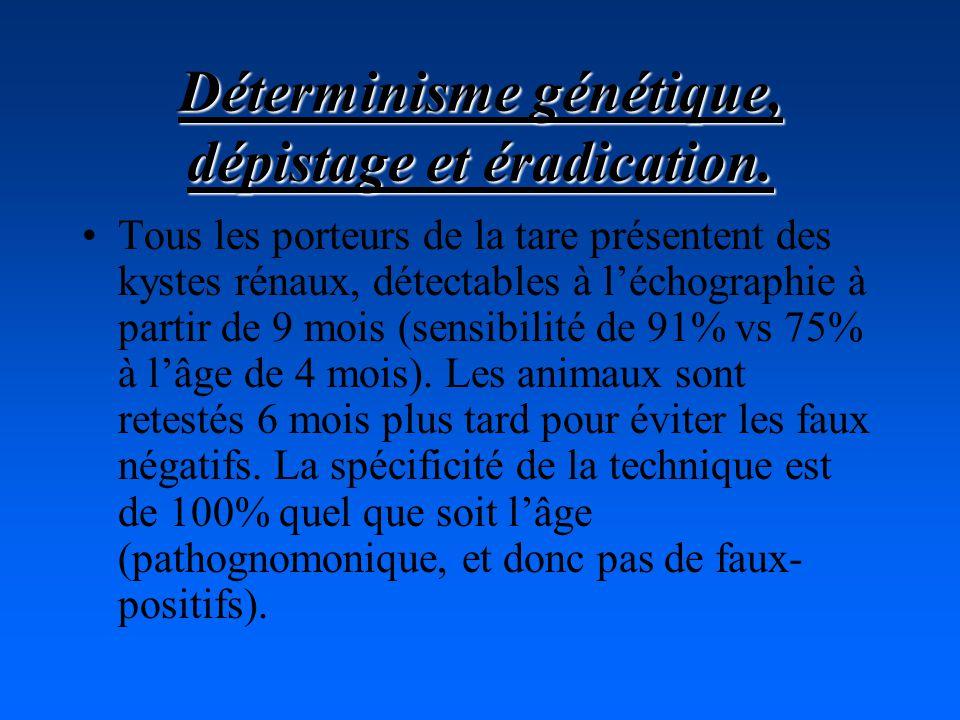 Déterminisme génétique, dépistage et éradication. Tous les porteurs de la tare présentent des kystes rénaux, détectables à léchographie à partir de 9