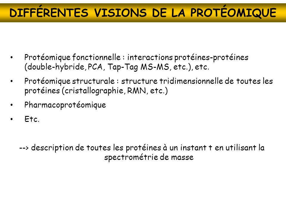 DIFFÉRENTES VISIONS DE LA PROTÉOMIQUE Protéomique fonctionnelle : interactions protéines-protéines (double-hybride, PCA, Tap-Tag MS-MS, etc.), etc. Pr