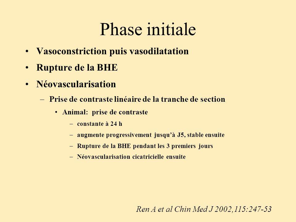 Phase initiale Vasoconstriction puis vasodilatation Rupture de la BHE Néovascularisation –Prise de contraste linéaire de la tranche de section Animal: