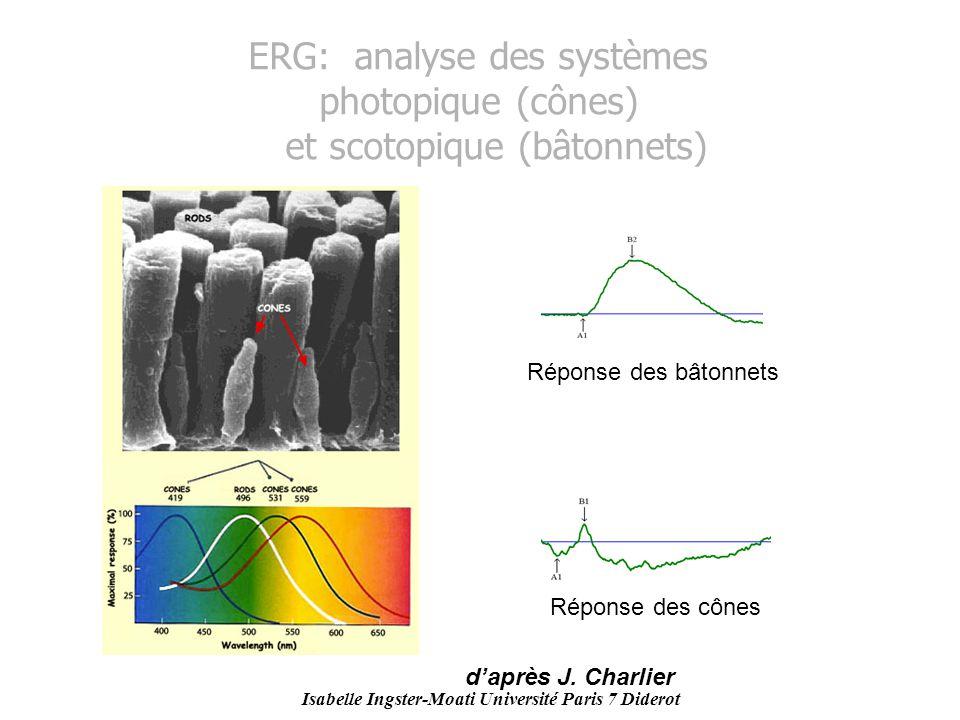 Isabelle Ingster-Moati Université Paris 7 Diderot ERG: analyse des systèmes photopique (cônes) et scotopique (bâtonnets) Réponse des bâtonnets Réponse