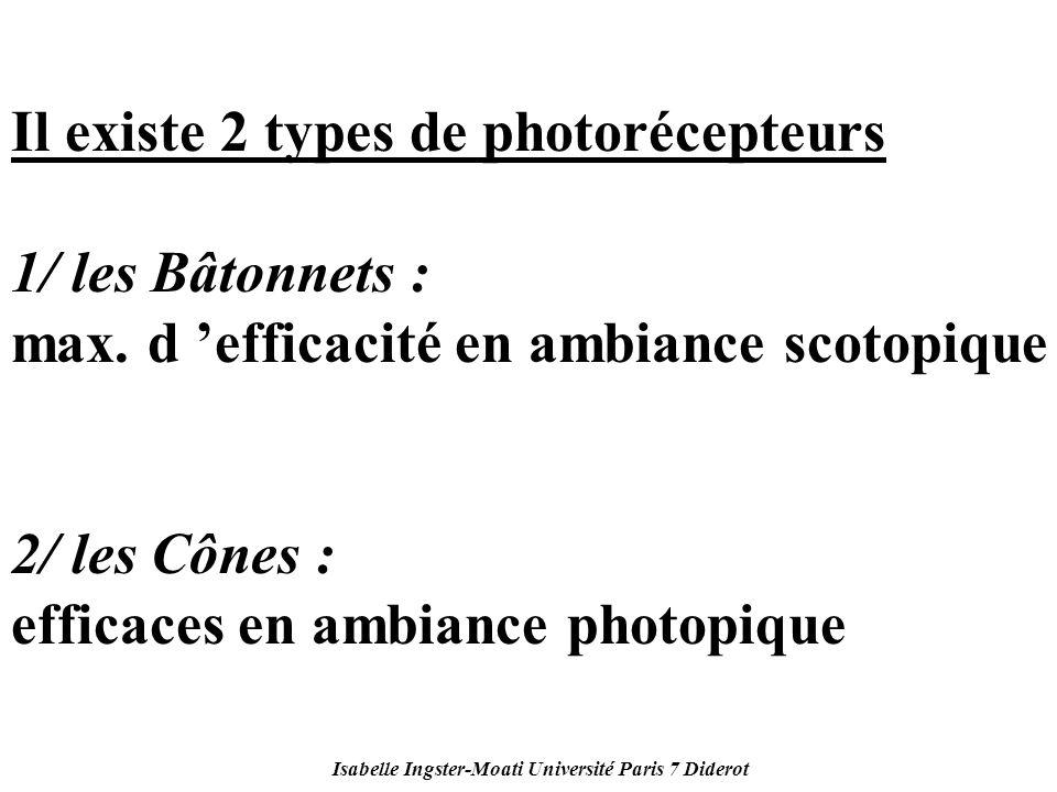 Isabelle Ingster-Moati Université Paris 7 Diderot Il existe 2 types de photorécepteurs 1/ les Bâtonnets : max. d efficacité en ambiance scotopique 2/