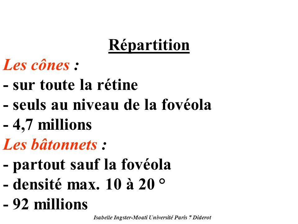 Isabelle Ingster-Moati Université Paris 7 Diderot Répartition Les cônes : - sur toute la rétine - seuls au niveau de la fovéola - 4,7 millions Les bât