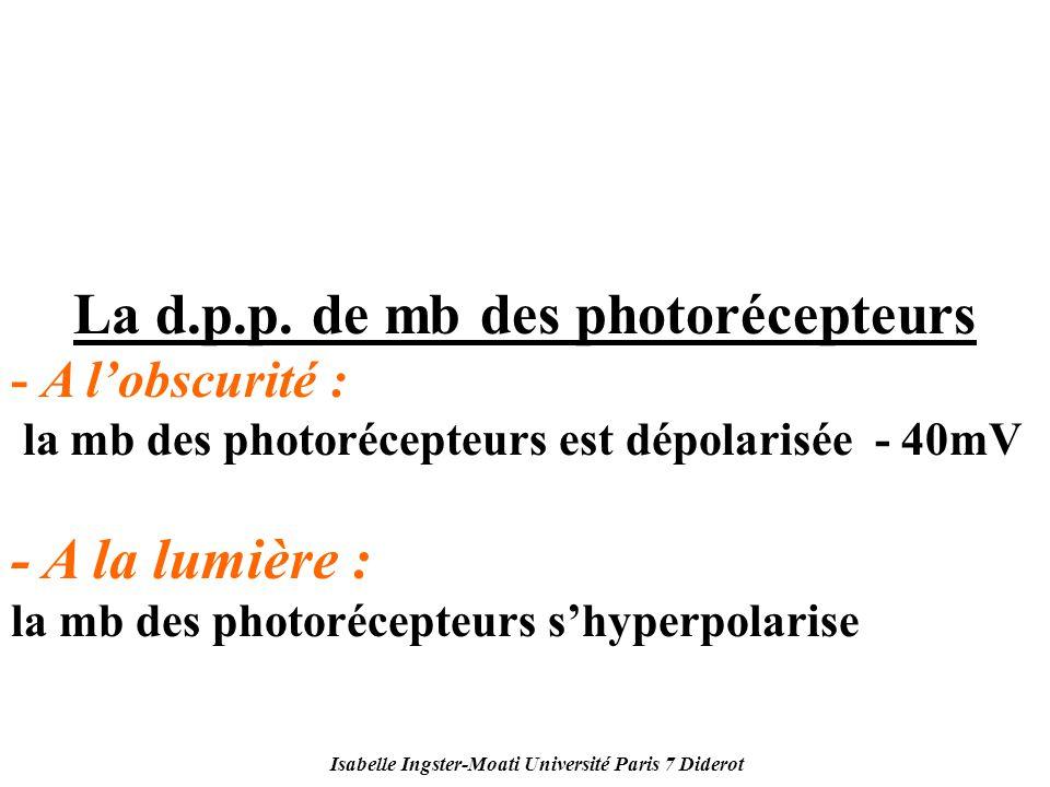 Isabelle Ingster-Moati Université Paris 7 Diderot La d.p.p. de mb des photorécepteurs - A lobscurité : la mb des photorécepteurs est dépolarisée - 40m