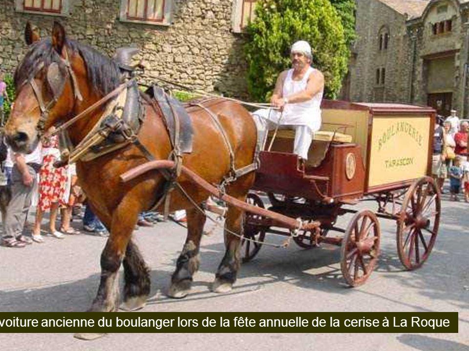 Les Lipizans, chevaux de race, ici et là, à La Roque