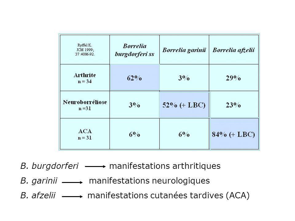 B. burgdorferi manifestations arthritiques B. garinii manifestations neurologiques B. afzelii manifestations cutanées tardives (ACA)